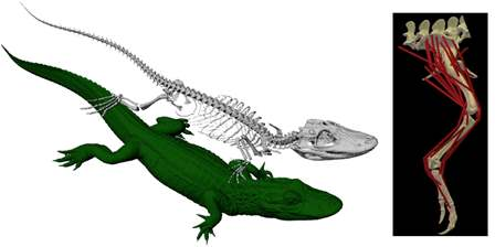 Gator3,updated